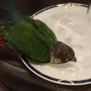 涼しくても水浴び