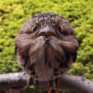 鳥さんたちの正面顔