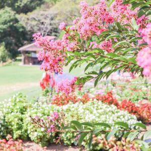 【お知らせ】子連れで行った公園情報メインの新ブログを立ち上げました!