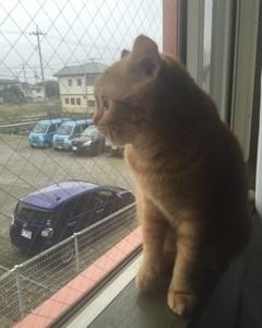 飼い猫ちゃんが我が家に来た時