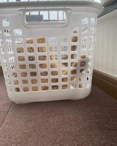 籠の中の・・・にゃん☆彡