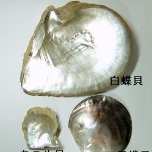 【ジュエリー学No.7-1】真珠の種類を一挙紹介!あなたの手元の真珠は何真珠?