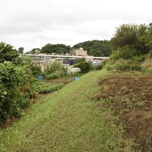 鎌倉北西端の山襞上を歩いている