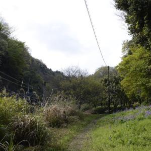 山ノ内尾藤ヶ谷