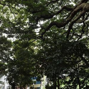 山ノ内 八幡神社