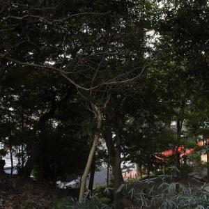八雲神社の裏手辺り