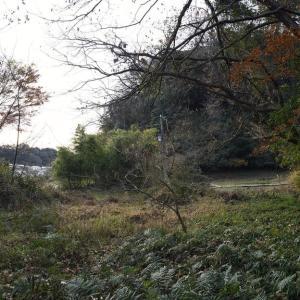 久木の谷戸