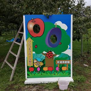 七飯町【築城(ついき)果樹園】のりんご『トキ』