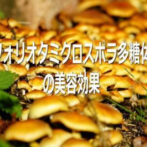 フォリオタミクロスポラ多糖体の美容効果