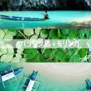 【読めば全て分かる】奇跡の植物モリンガ × フィリピン パラワン島 // 2020年最新版