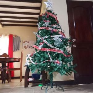 【勝手に】クリスマスツリー/ パラワン島