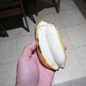 【奥が深い】食べると双子が生まれるツインバナナに赤や青のバナナ