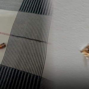 【新年明けて90分】祝砲で九死に一生を得た赤ちゃん / パラワン島