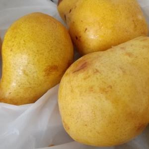 果樹園で1袋(10個入)100円の洋梨・パートレットをゲット!