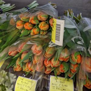 大田花市場へ!