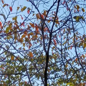 大きな夏と小さな秋が