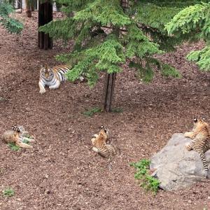 北海道で一番人気の動物園