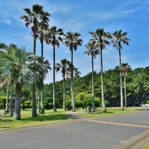 辻堂海浜公園ジャンボプール、2020年度の営業中止 市営プールは入れ替え制で営業