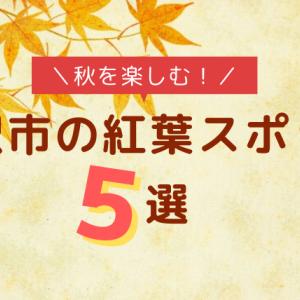 湘南で秋を満喫!藤沢の紅葉スポット5選