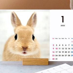 「本当に500円?」写真で作れる卓上カレンダー「TOLOT(トロット)」がオシャレ