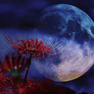 【魚座の満月】スペシャルエネルギーのタイミングでして欲しいこと