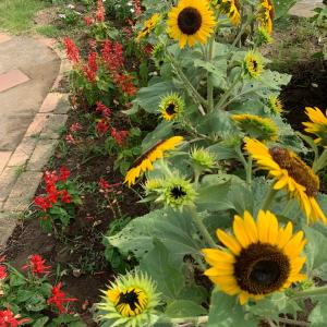 夏の庭とワンコ