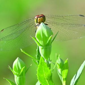 とある庭園で昆虫と植物を撮影しました!
