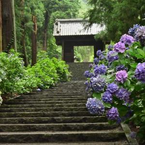 ✿栃木市 大中寺でアジサイを撮影!