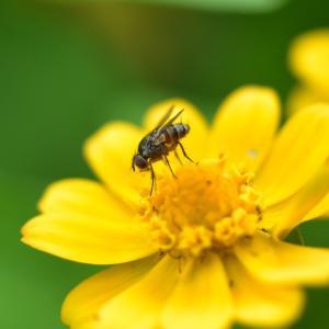 🐝近所の公園で虫を接写撮影しました🐛