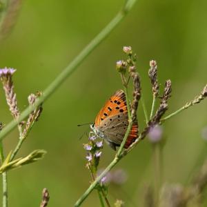 🐞荒川河川敷で昆虫を撮影しました🐝
