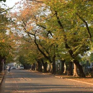 🍂都心も秋を感じる季節になりました!