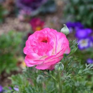 ✿近所の公園で花を撮影しました☺