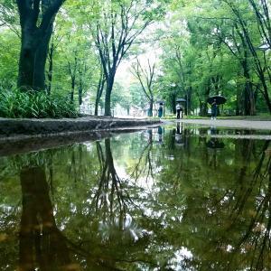 ☔雨天の上野公園~不忍池❀