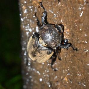 🐛深夜の森で昆虫採集☺