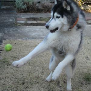 お庭でボール遊び♪