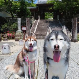 伊豆旅行3日目は憧れの修善寺へ