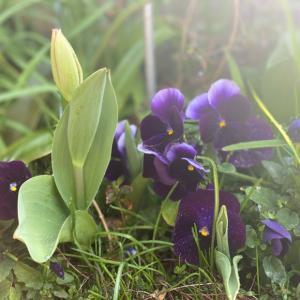 お庭が春っぽくなってきた