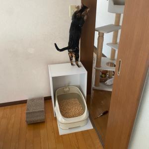 猫トイレの場所を変更!