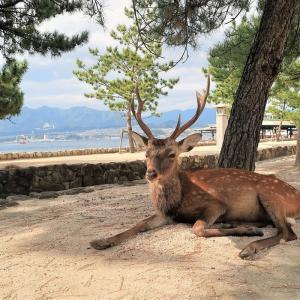 【広島県・廿日市市】宮島風景と鹿