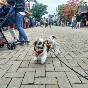 【犬旅】わんこと泊まれる宿へ〜軽井沢の秋を満喫!