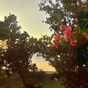 西表島で泊まったところ 海の家 南ぬ風
