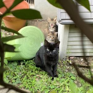 【番外編】セブンイレブン前の親子猫