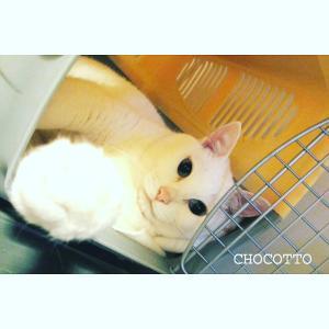 愛猫14歳❀.*・゚健康な猫でも体の変化が起きやすい年齢!?