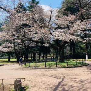 桜とヨシノボリ