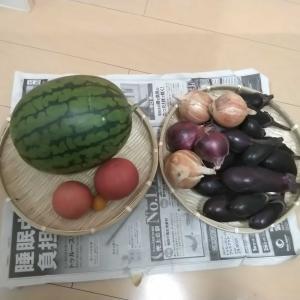 実家でとれた野菜とスイカ