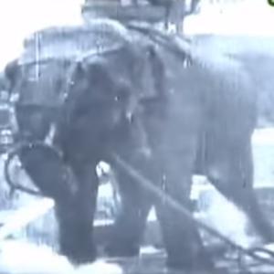 人間に振り回された象のトプシー