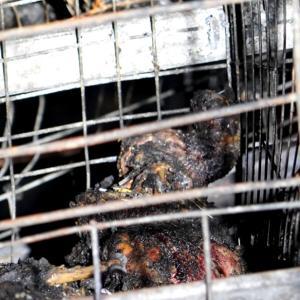 火災で焼け死ぬ動物たち