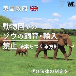 イギリスが ゾウの飼育・輸入禁止の法案を策定か