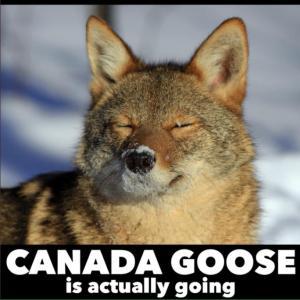 カナダグースが毛皮製品の製造を停止