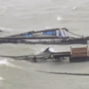台風の被害に合うイルカたち